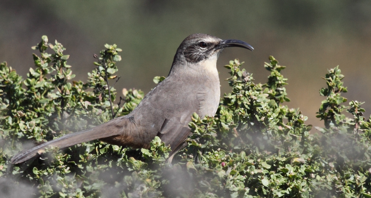 Mockingbird - Mockingbird